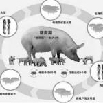 农业物联网解决方案:智能化养殖,告别传统养殖的局限