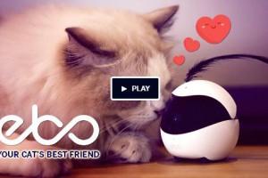 Ebo推出智能伴侣机器人 可用于远程监控猫咪并跟踪