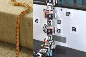 蛇形机器人,还是像蛇的爬行机器人?
