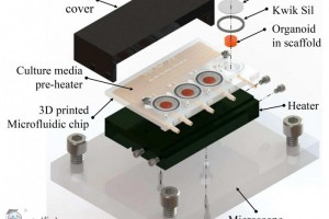 科学家在3D打印的生物反应器中培育出微小大脑